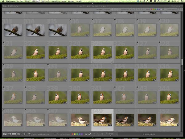 Vista de las imágenes marcadas como descartadas (atenuadas), se ha desactivado el filtrado de fotos