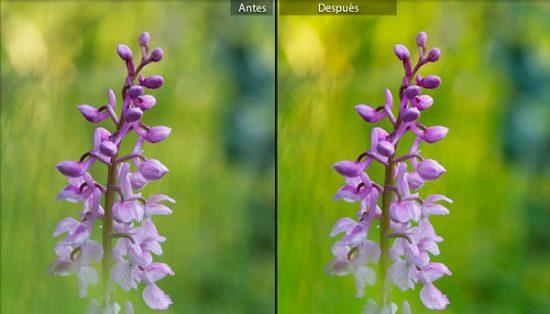 Ajuste de saturación +17 produce un resultado de colores más vivos